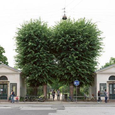 rosenborg-6
